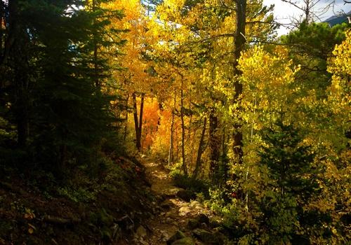 yellowforest2